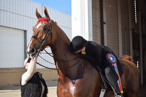 Drew Taylor Hewitt kissed So Swank after winning the Adult Five-Gaited Show Pleasure Championship. This pair won their age group qualifier as well.