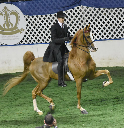 Fox Grapes Dandy Lion and Steve Wheeler were the Park Pleasure Classic National Champions. Photo by Avis.