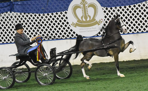 John Wrather drove The Remington to wins in both the Open Harness Pony qualifier and championship. Photo by Avis.