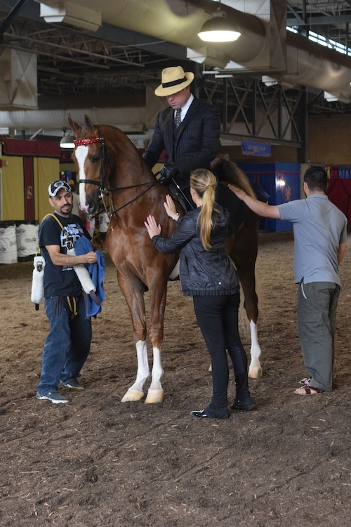 Three Year Old Three Gaited winner Crackin Up prepares to enter the ring with Neil Visser.