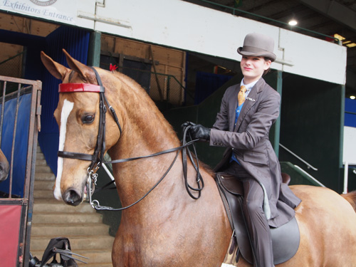Caroline Henry and her new partner Callaway's Right Trumps Might had a great debut in the Limit Rider Three-Gaited Show Pleasure class.