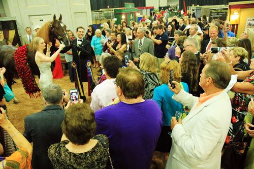 The crowd presses in around Marc Of Charm after his World's Grand Championship win. Photo by Julia Shelburne-Hitti