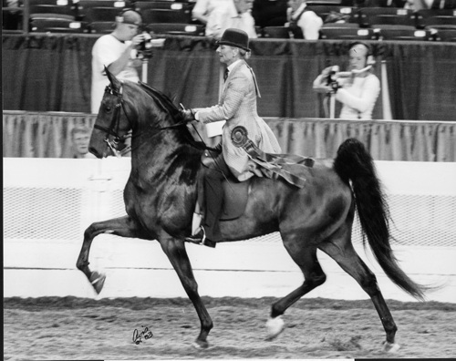 The homebred CH Harlem's Moving Man carried Vicki to her first World's Championship honor.