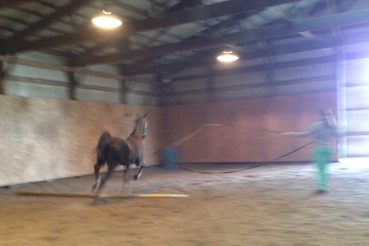 Since I could't ride right away after my run, I continued working on lunging Slider over the ground poles.