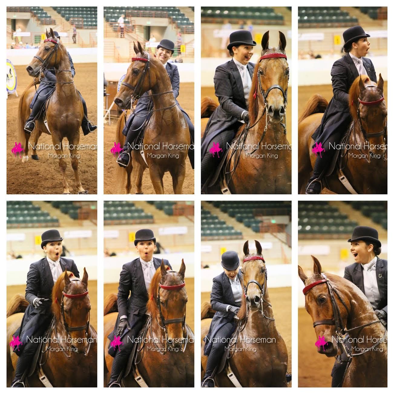 I was stunned when Wrapped In Chocolate and I won the Amateur Five-Gaited class at Pro-Am. (Yep, my horse is definitely the photogenic one!)