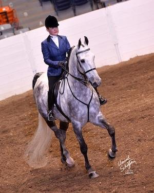 In Defense of the Hunt Seat Saddlebred