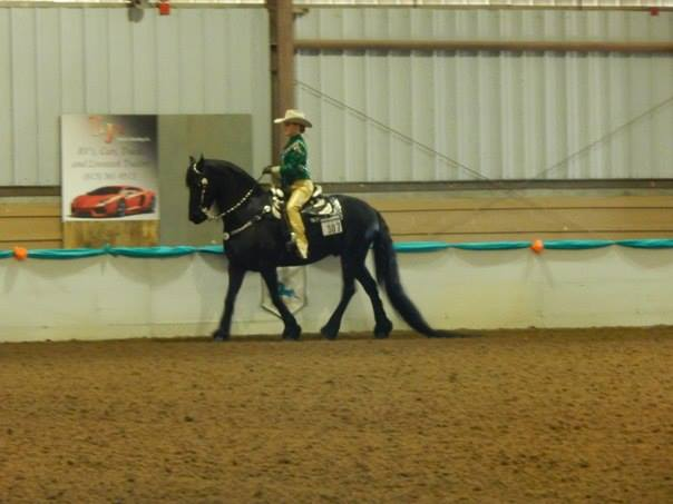 Showing the Friesian, Victor FC, at Gasparilla Charity Horse Show.