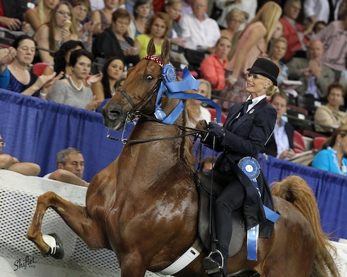 In 2014, Elisabeth and CH Bravo Blue were the Ladies Five Gaited Gelding World's Champions.