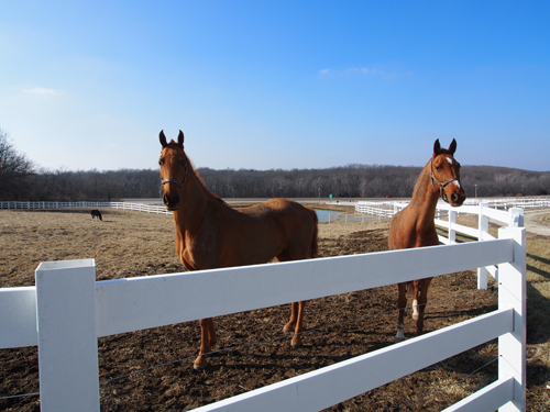 Magical Promises and VHF Belle Epoque enjoying their winter downtime.