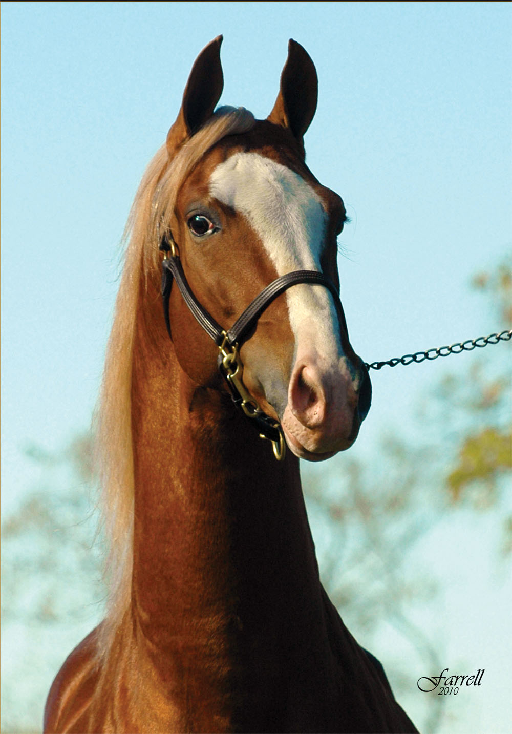 Mr. Las Vegas, one of the many stallions standing at Willowbank.
