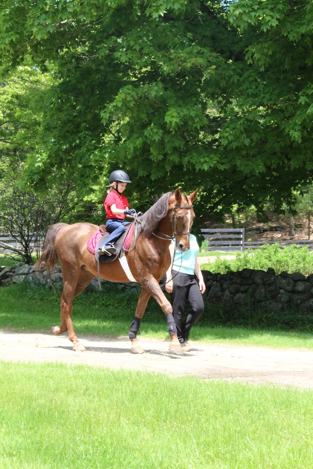 The summer months provide the perfect weather for working horses outside.