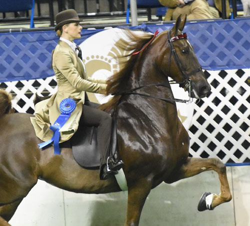 CH Moonlight Memories and McGee Bosworth won both their classes in the Ladies Amateur Five-Gaited division. Photo by Avis.
