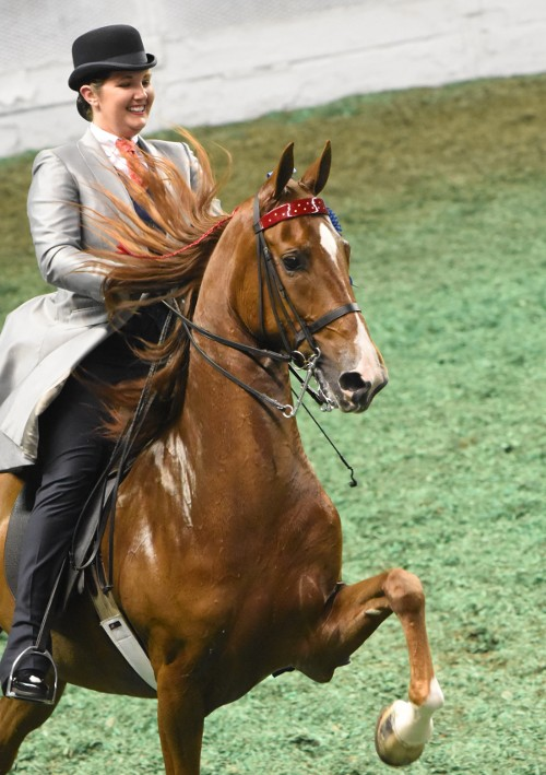 Adult Three-Gaited Show Pleasure Div 2 winners Warrior's Carumba and Laura Dozer Eliot.