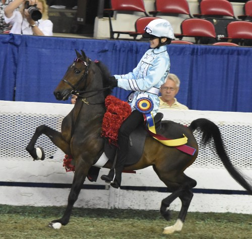 Alex Rudder and Cocked N Ready were the Junior Exhibitor Roadster Pony Under Saddle Championship.