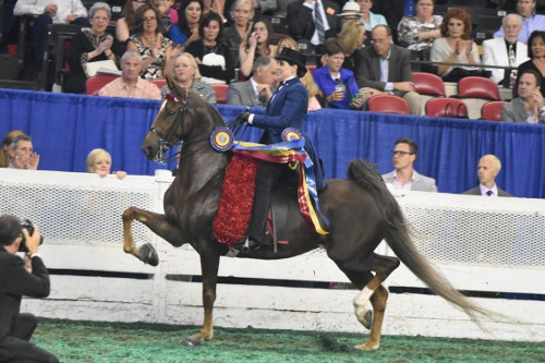 Barbara Goodman Manilow rode Im Still Dreamin to take the Amateur Three-Gaited Worlds Champion of Champion honors. This pair also won the Amateur Three-Gaited 15.2 Under class earlier in the week.