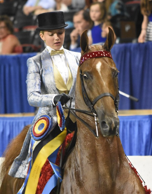 Reagan Campbell rode CH Real Action to the Junior Exhibitor Three-Gaited 13 Under Championship win.