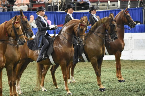 The Senior Equitation Worlds Championship line up.