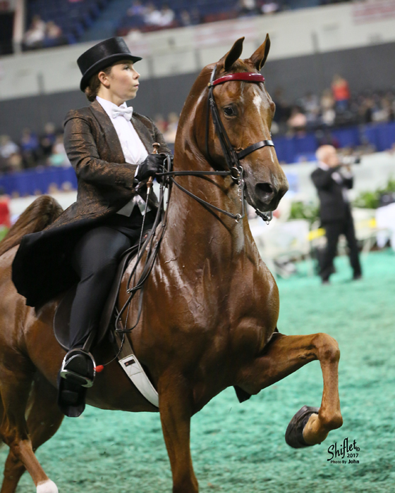 Three-Gaited Amateur Championship Saturday night with Hello Bombshell.