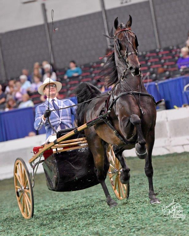 Carson driving Ultimate Charm at this year's World's Championship Horse Show.