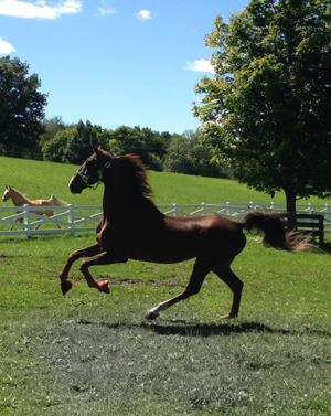 If you're having a bad day, watch the horses